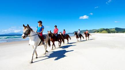 RedBalloon Beach Horse Riding and Wine Tasting Day Tour with Lunch