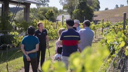 RedBalloon Mount Cotton Winery Tour and Tasting Session - For 2