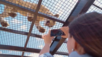 RedBalloon Lions 360 Experience with Lion Feeding and Zoo Entry