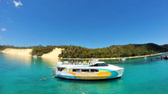 Dolphin Cruise to Tangalooma Wrecks with Transfers - For 2