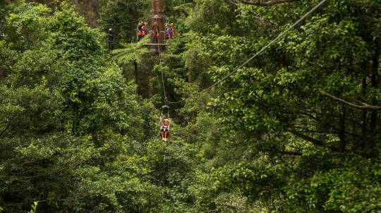 Zip Line Adventure and Treetop Walk In the Rainforest