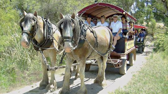 Morning Horse-Drawn Wagon Tour with Food and Wine Sampling