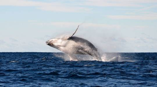 Whale Watching on a Speed Boat