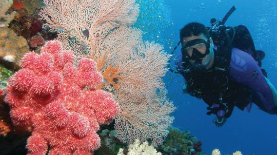 Outer Barrier Reef Cruise, Snorkel and Introductory Dive