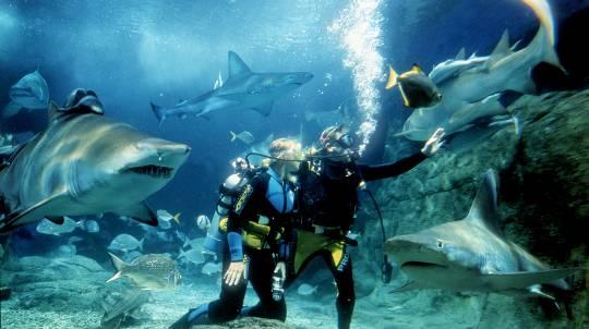 Shark Diving at SEA LIFE Melbourne Aquarium - For 2