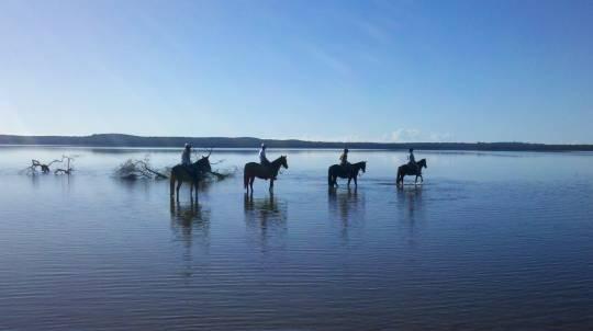 Noosa Beginners Horse Trail Ride