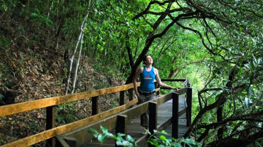 Cape Tribulation, Daintree and Wildlife Tour Full Day -Adult
