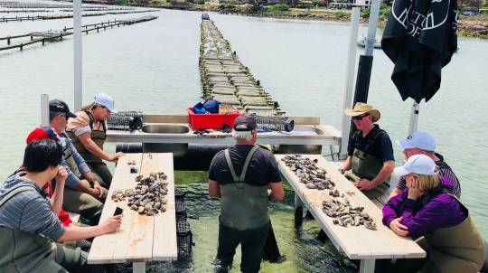 Oyster Farm Tour with 24 Oysters and Sparking Wine - For 2