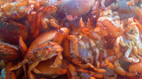 Deep Sea Fishing and Crabbing Trip - Full Day
