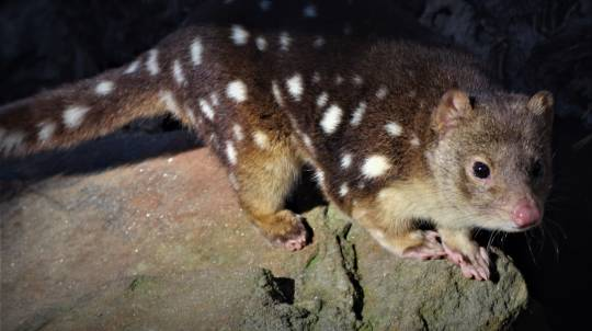 2 Hour Nocturnal Tour at Softfoot Marsupial Sanctuary