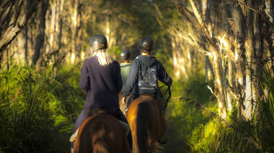Byron Bay Horse Trail Ride - 90 Minutes