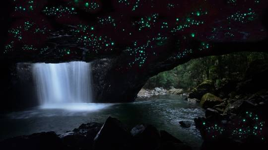 Glow Worm Night Tour with Transfers - 3.5 Hours