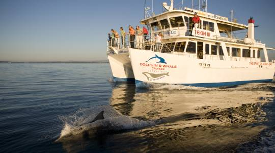 Jervis Bay Dolphin Watching Cruise - 90 Minutes