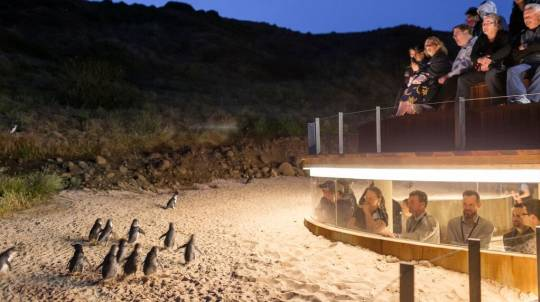 Great Ocean Road and Phillip Island Penguins Tour - 2 Days