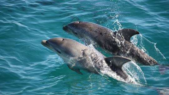 Dolphin and Seal Watching Cruise - 3 Hours