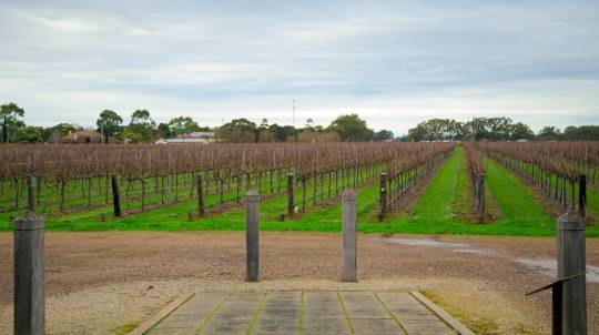 Limestone Coast Gourmet Adventure with Cave Tour - 2 Nights