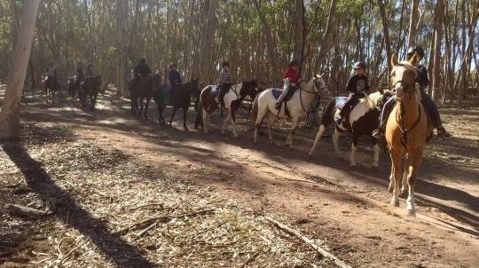 Introduction to Trail Riding - 90 Minutes