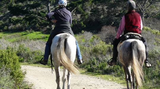 Private Horse Riding Tour - For 2