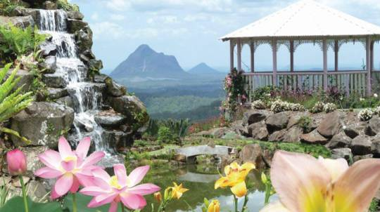 Maleny Botanic Gardens Entry and Devonshire Tea - For 2