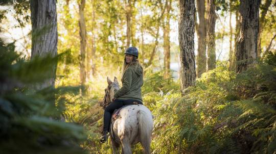 Byron Bay Horse Trail Ride - 60 Minutes