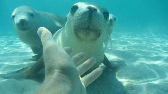 Swim with Sea Lions in Port Lincoln - Child