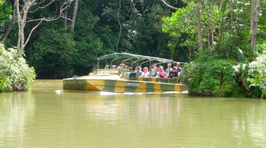 Kuranda Day Tour with Railway, Cableway and Lunch - Child