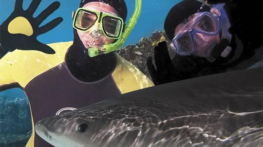 Tropical Reef Snorkel at Sea World - Adult