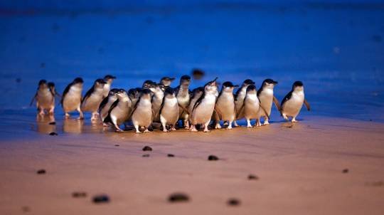 Penguin Parade, Koalas, Antarctic and Churchill 4 Parks Pass