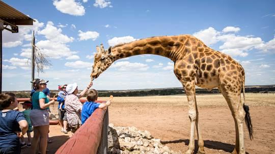 Monarto Open Range Zoo Admission