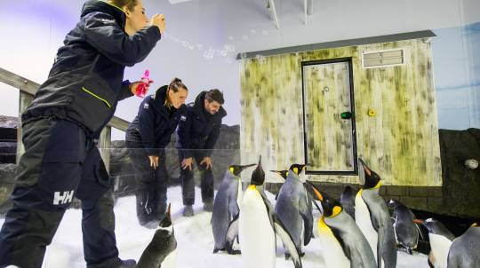 Up Close Penguin Encounter at SEA LIFE