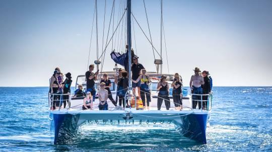 Catamaran Cruise and Swim with Humpback Whales