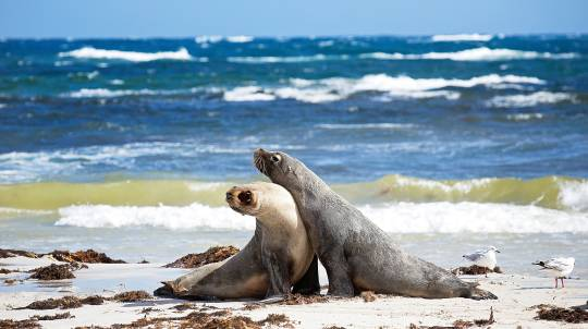 Kangaroo Island Wildlife Discovery Day Tour - For 2