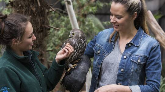 Behind the Scenes at the National Zoo - Weekday