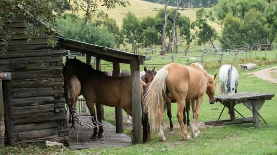 Horse Riding Getaway Adventure - 2 Nights