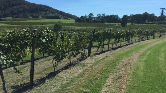 Private South Coast Winery Tour with Lunch and More - For 4