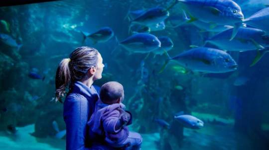 Private VIP Tour of SEA LIFE Sydney Aquarium - For 2