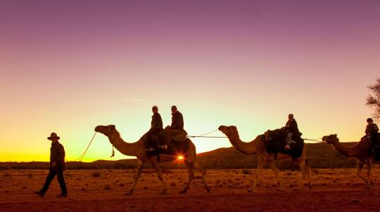 Outback Sunset Camel Ride Tour - Adult