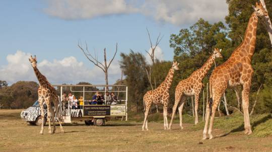 Overnight Zoo Safari With Dinner and Breakfast - For 2