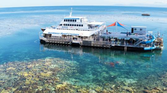 Great Barrier Reef Cruise with Lunch and Snorkelling - Adult