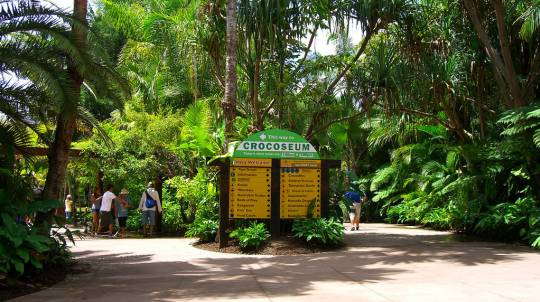 Australia Zoo Day Tour with Animal Shows - Child