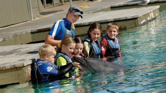 Dolphin Aqua Adventure at Sea World with Day Entry - Child