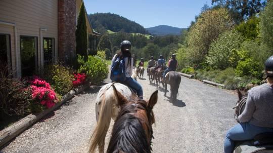 Full Day Yarra Valley Wine Tasting Ride