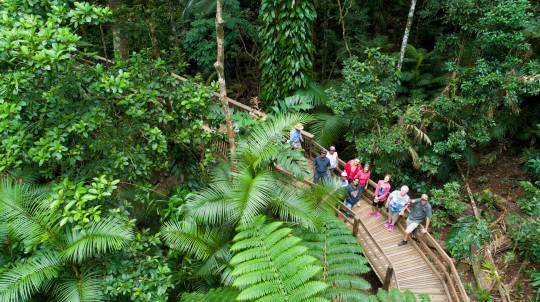 Daintree Rainforest, Cape Tribulation & 4WD Tour - Adult