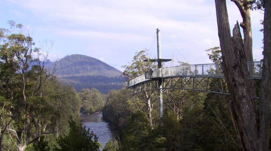 Huon Valley Scenic Day Tour with Light Lunch
