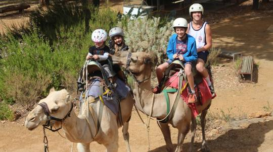 Full Day Perth Hills Tour with Camel Ride and Lunch