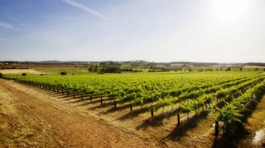Luxury Barossa Vineyard Tour with Tastings