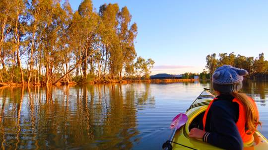 Gunbower Creek and Cohuna Lagoon Kayaking Tour - 3 Hours