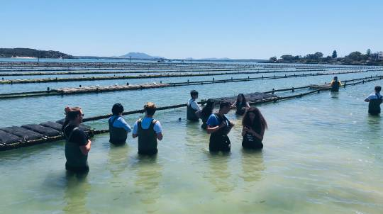 Oyster Farm Tour with 2 Dozen Oysters and Wine - For 2