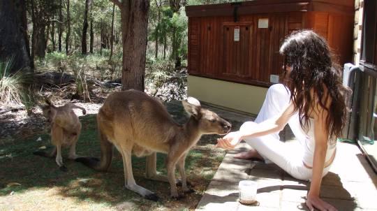 Spa Chalet Wildlife Escape - 2 Nights