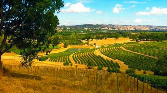 Off The Beaten Track 4WD Food and Wine Tour